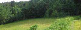 gozdni rob